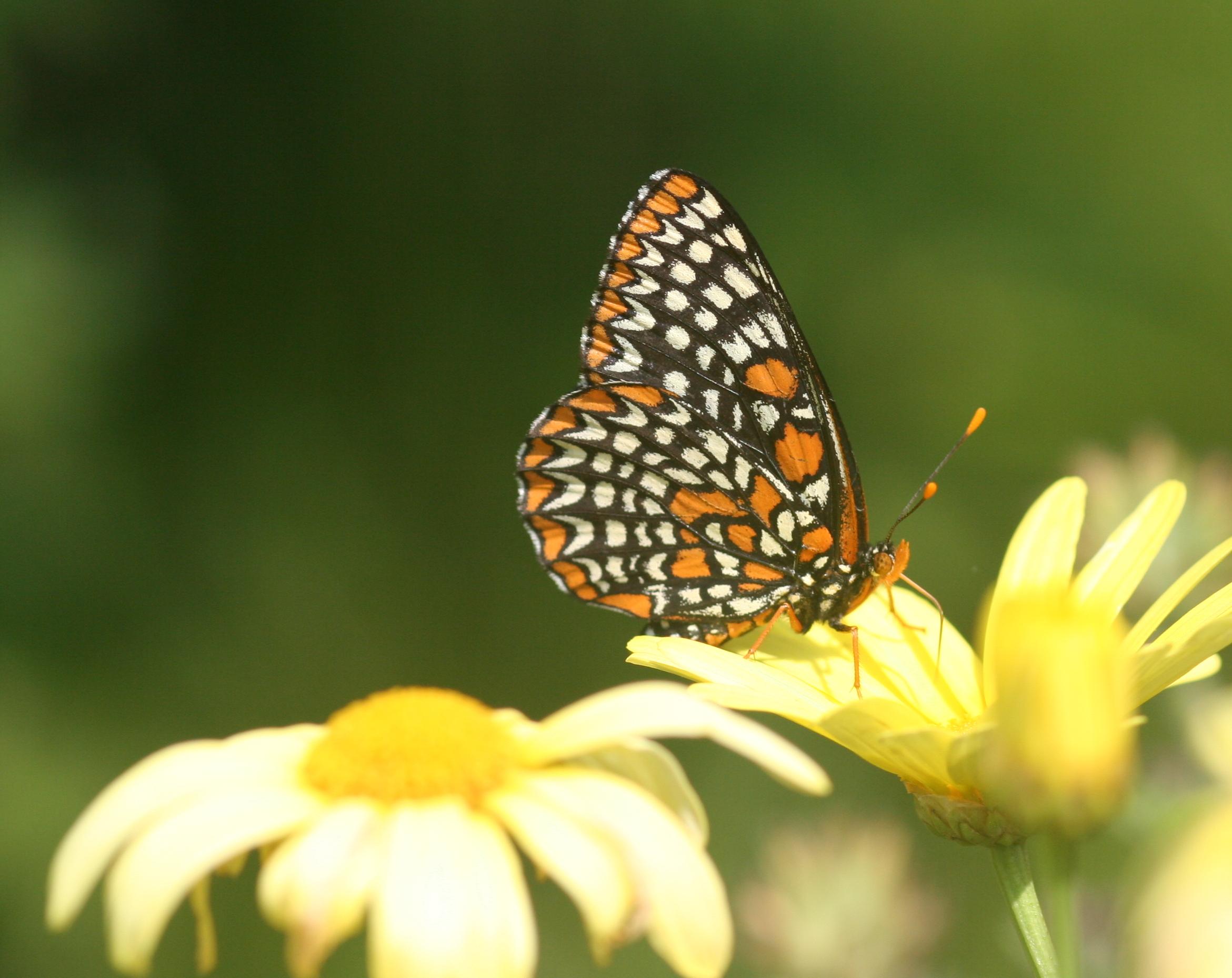 Bildresultat för pollination