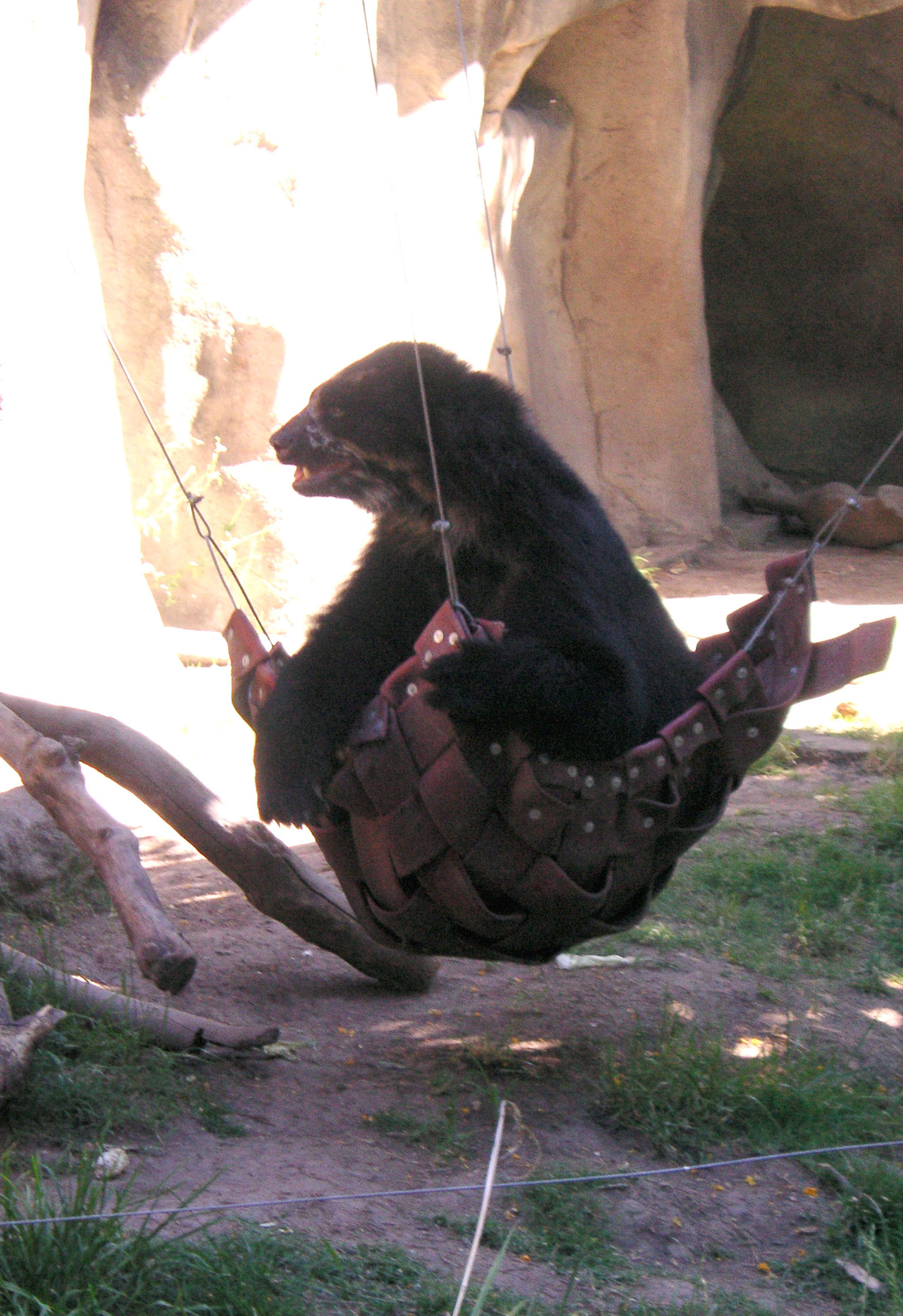 file bear in a hammock jpg wikimedia commons