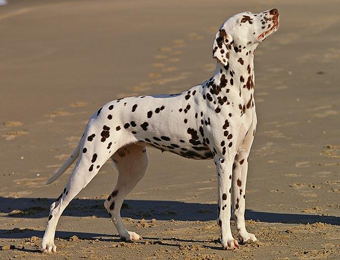 How these 12 dog breeds got their original names 21