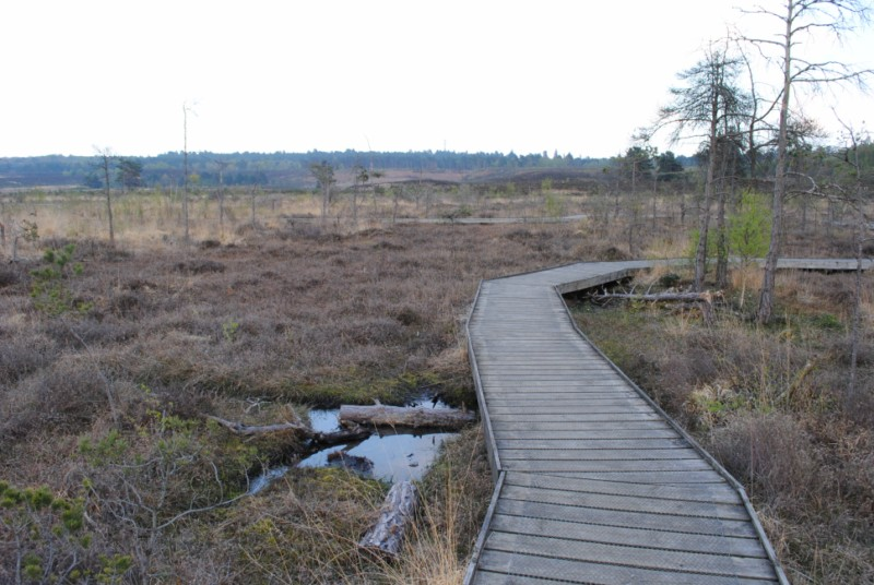 Boardwalk on Dersingham Bog - geograph.org.uk - 1828249