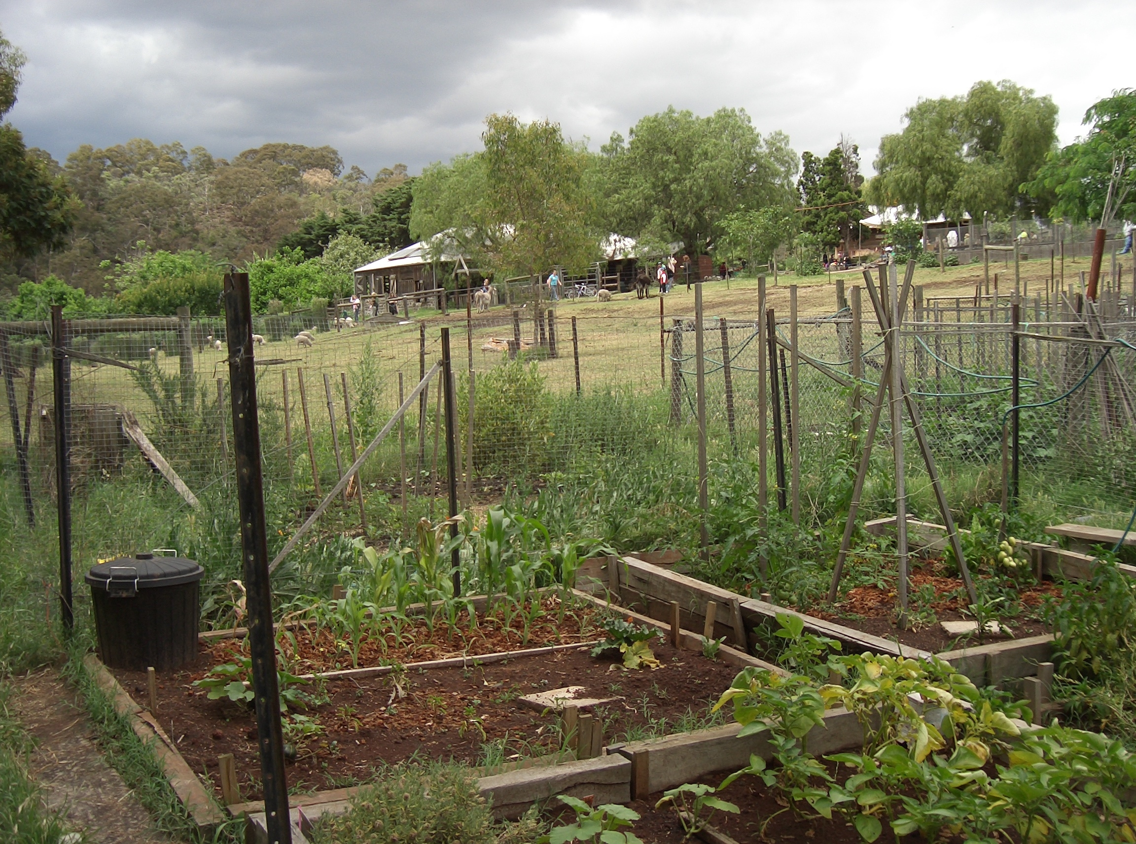 Collingwood children 39 s farm - Profitable crops small plots ...