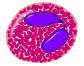 Eosinophil 1.png