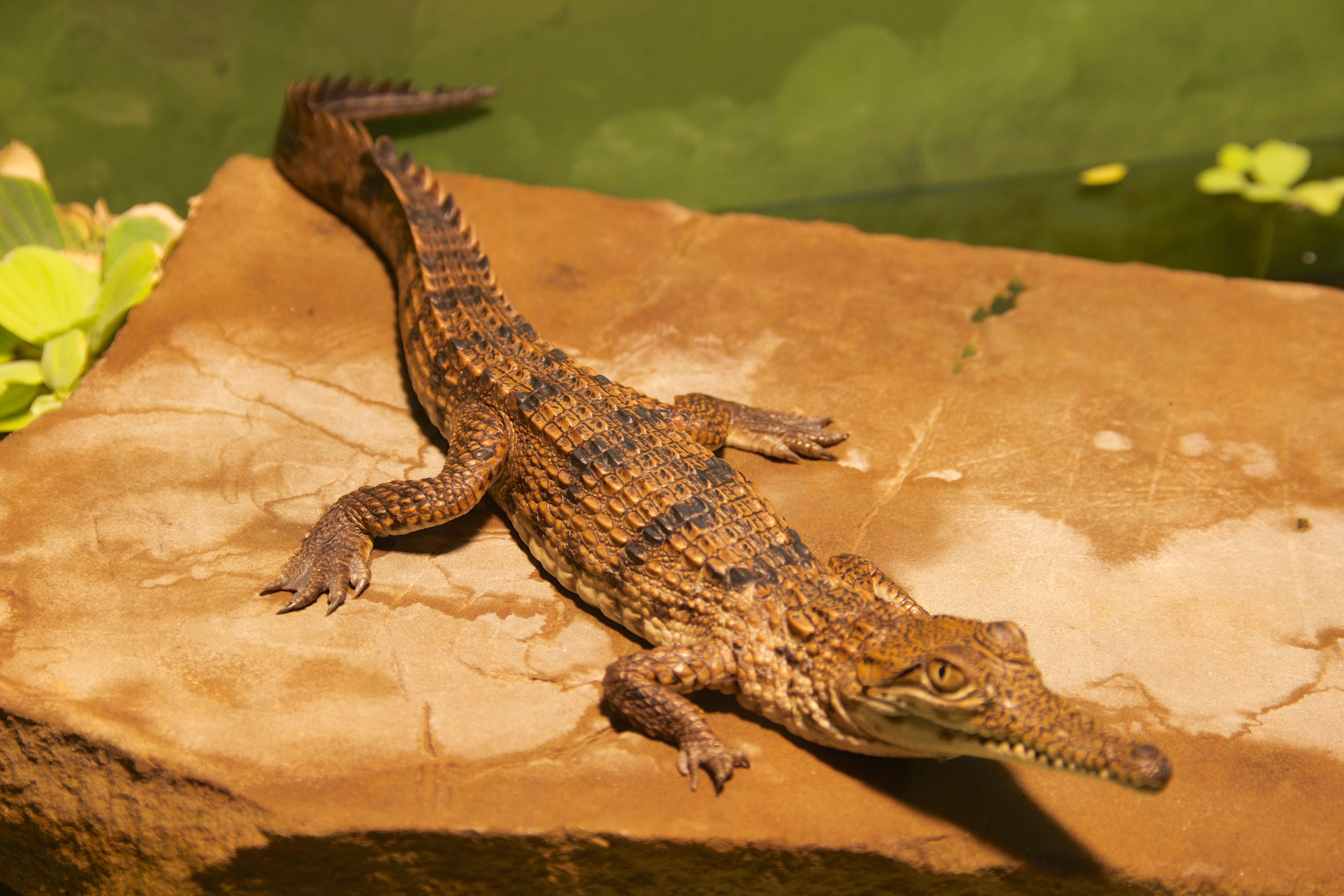 how to avoid crocodiles in australia