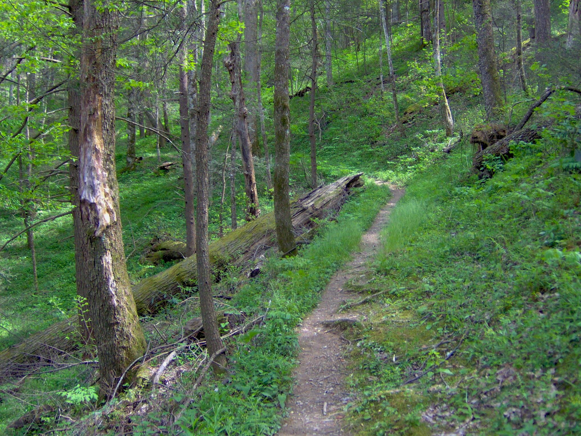 File:Gabes-mountain-trail-gsmnp1.jpg