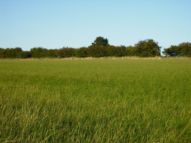 Grass field adjacent to A169 near Lockton - geograph.org.uk - 225301