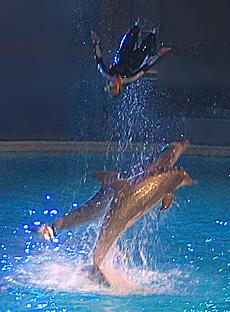 Kolmarden Dolphin Show Sweden 2004