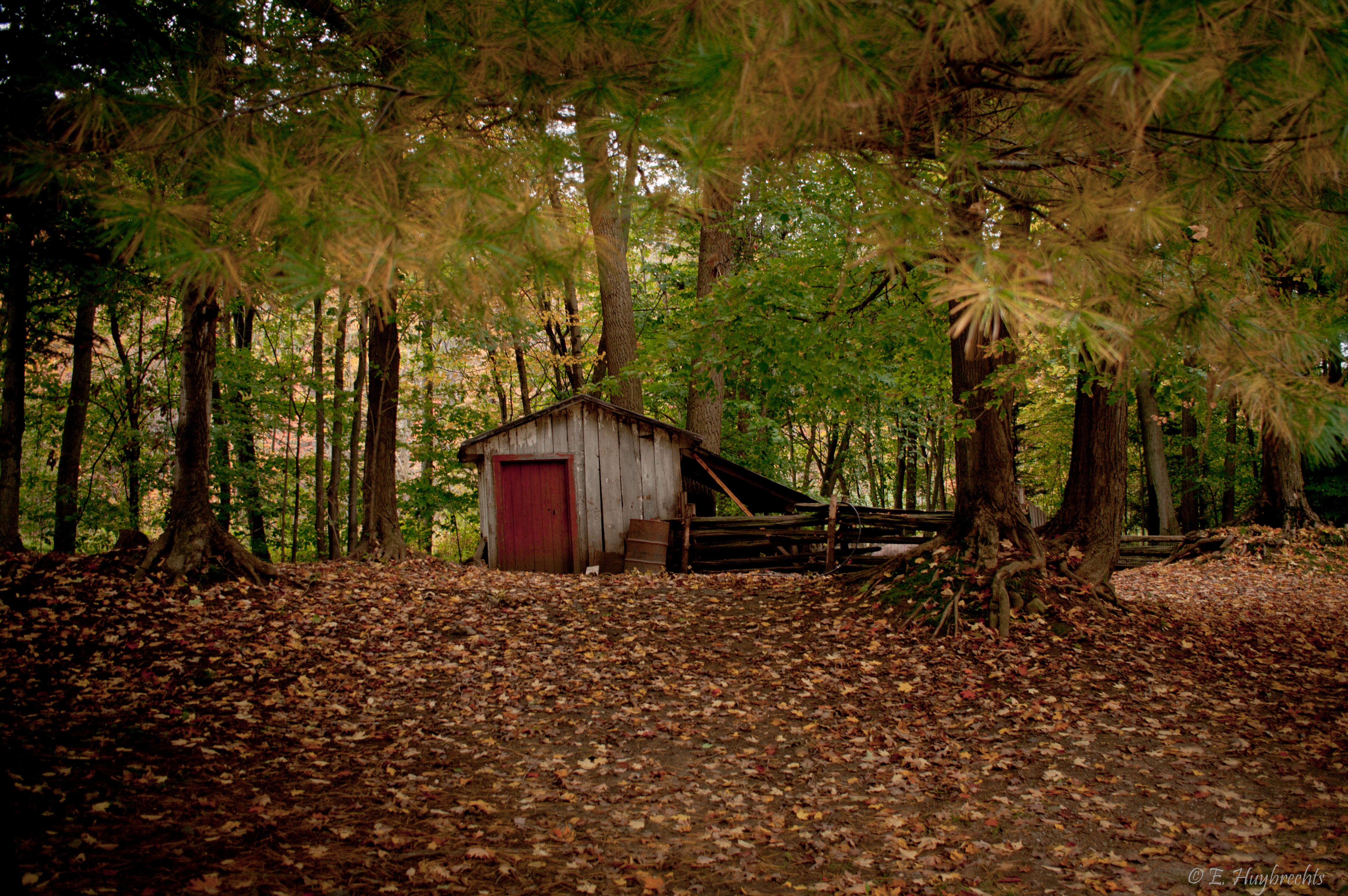 FileLa cabane au fond du bois (5067406929)jpg  Wikimedia Commons