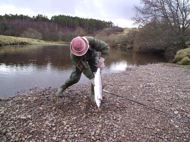 Landing a Hen Salmon on the River Oykel.