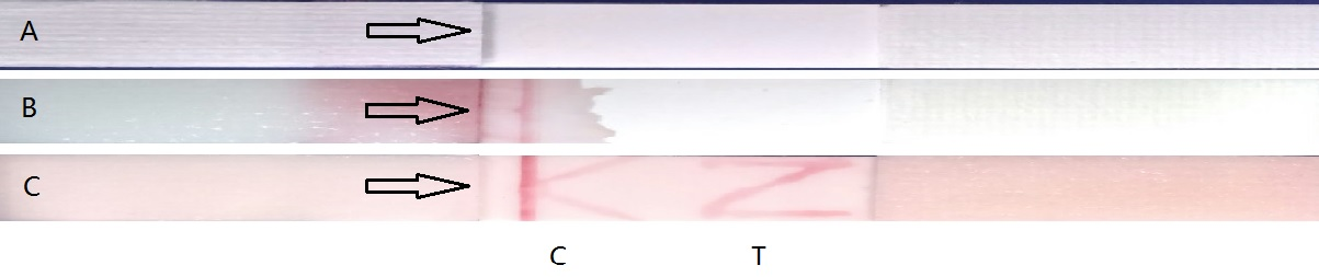 Lateral flow immunochromatographic test KZ.jpg