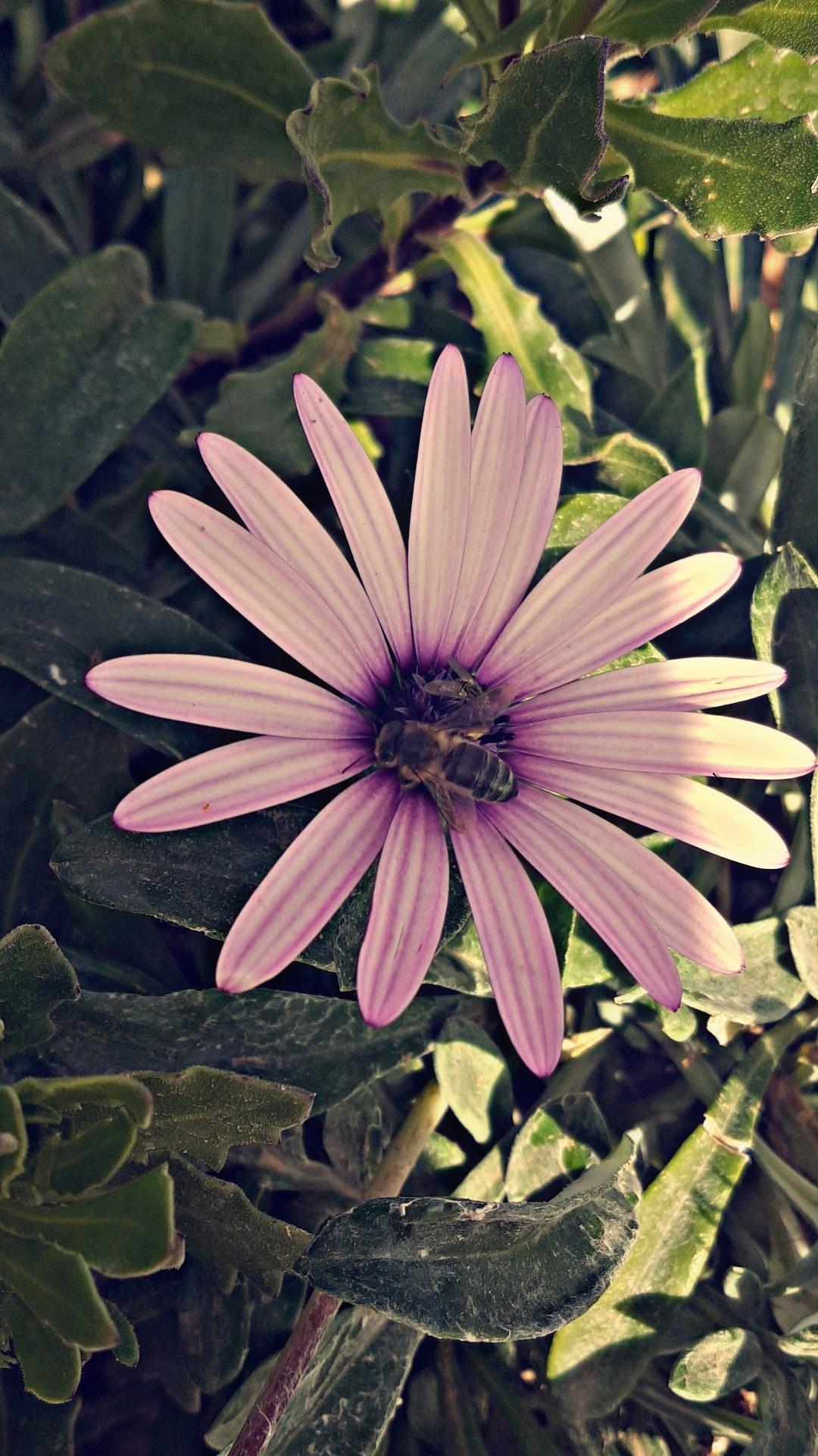 Filelovely Pink Flowersg Wikimedia Commons