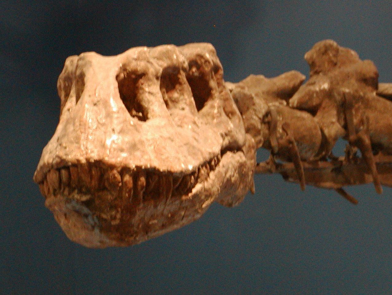 Lufengosaurus   Land Before Time Wiki   FANDOM powered by ...