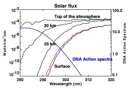 Ozone solar UV absorb DNA action.jpg