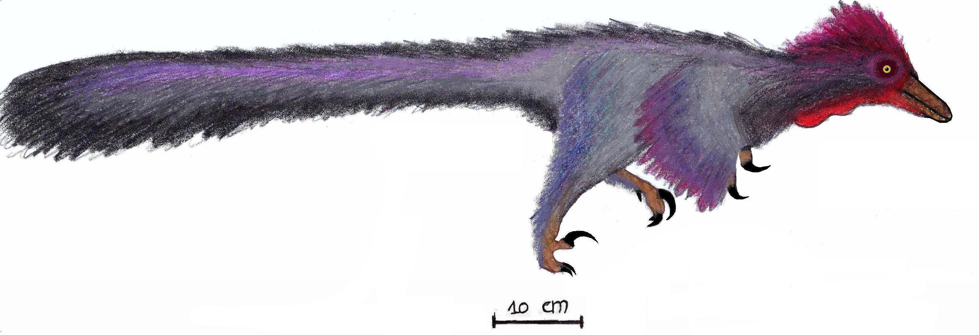 Resultado de imagen de pamparaptor
