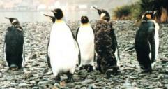 Image:Penguin-thumbnail1.jpg