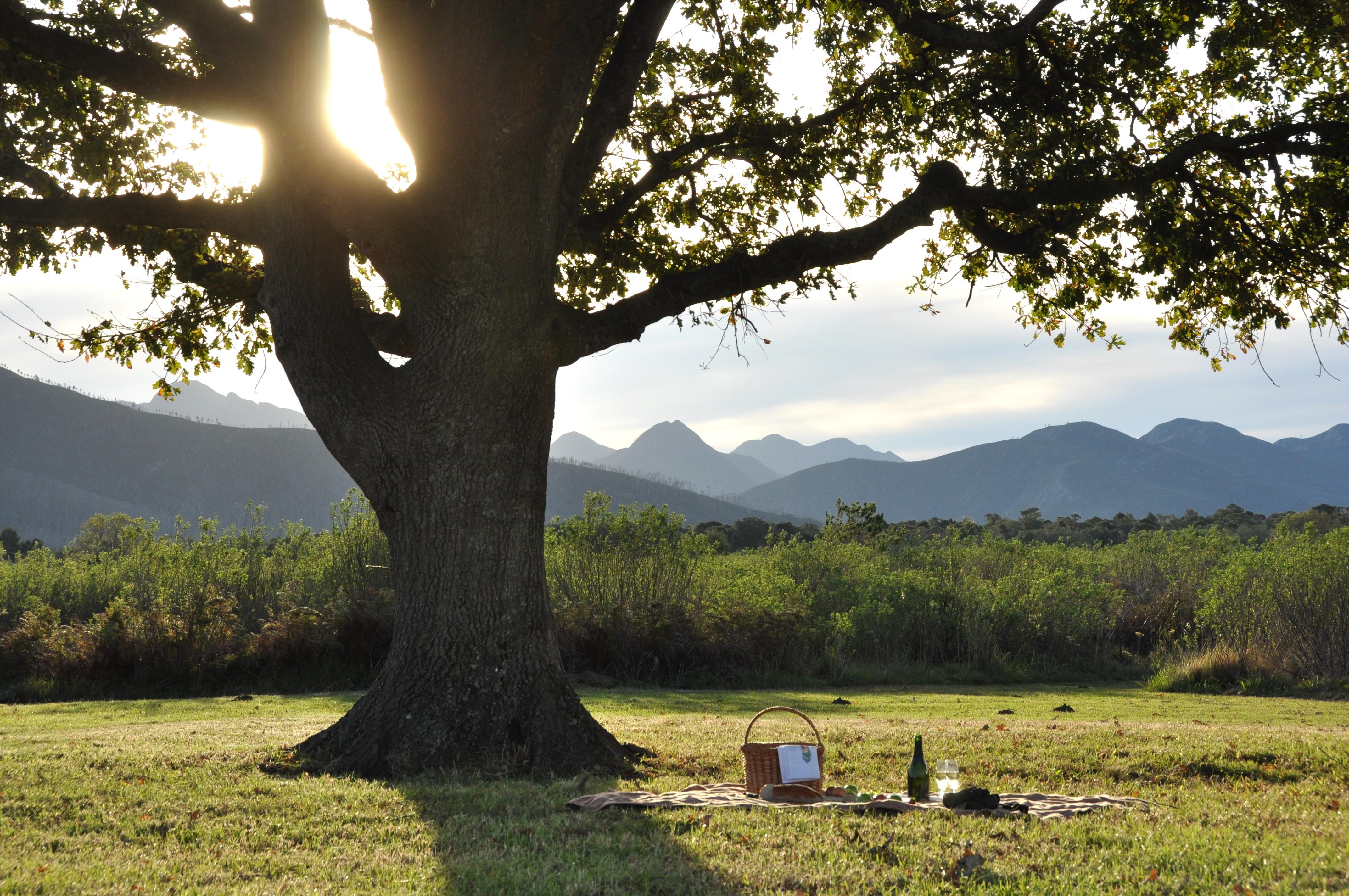 FilePlatbos Reserve Oak Tree PicnicJPG Wikimedia Commons