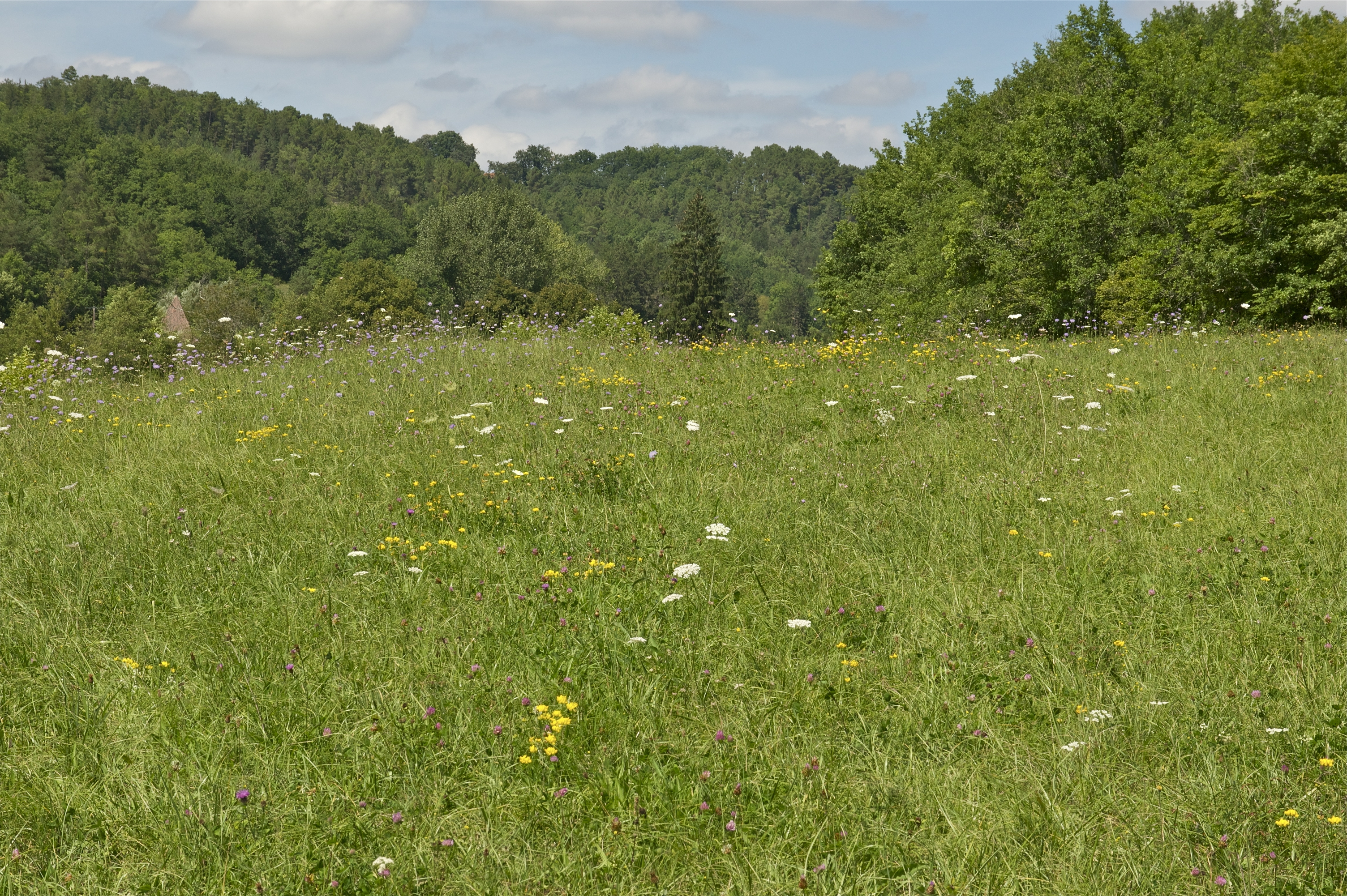file prairie fleurie wikimedia commons