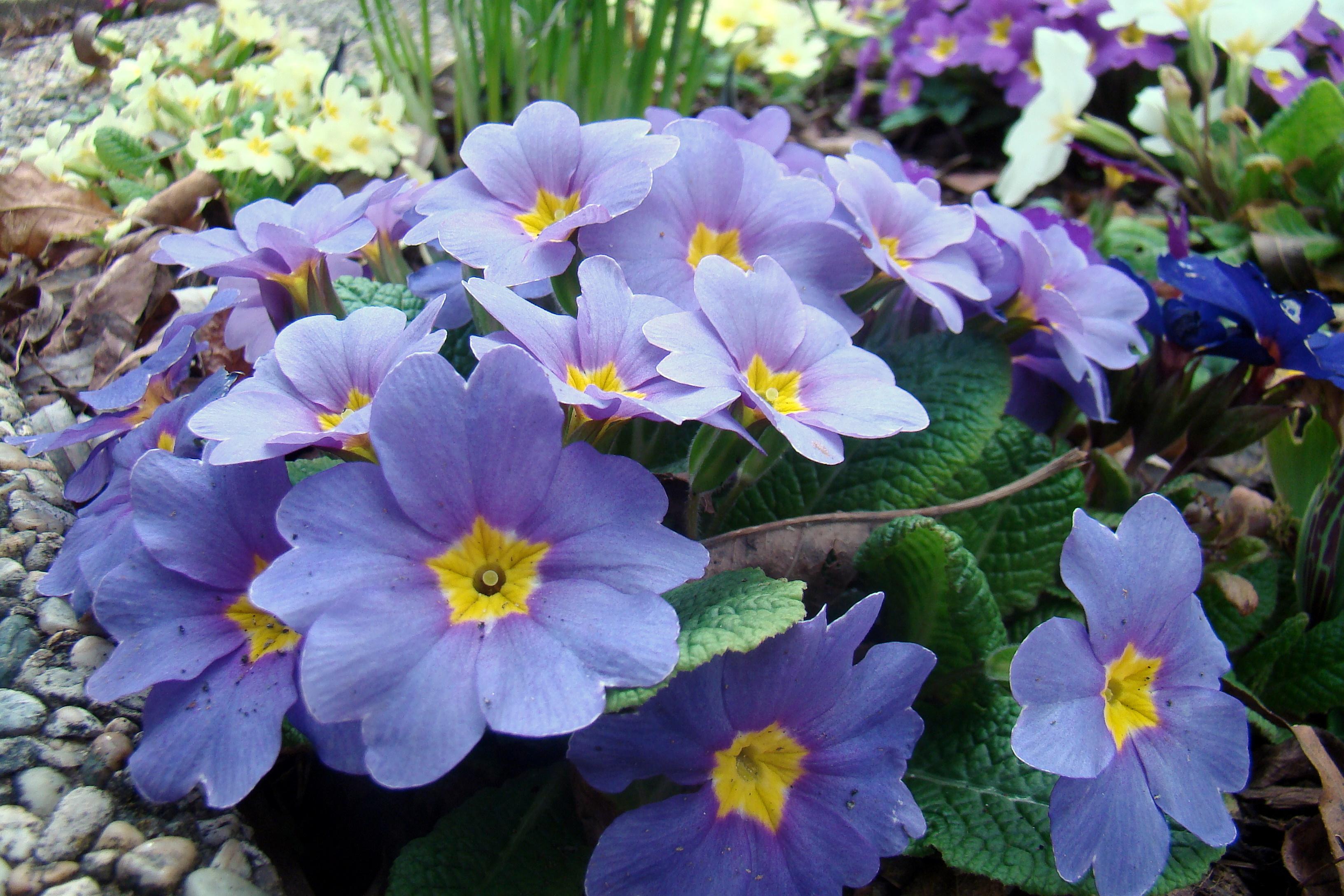 адовые цветы с мясистыми листьями 3264 x 2176 · jpeg