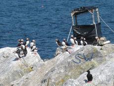 Eastern Egg Rock Island island in the United States of America