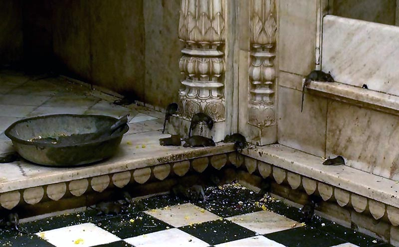 File:Rat temple.jpg