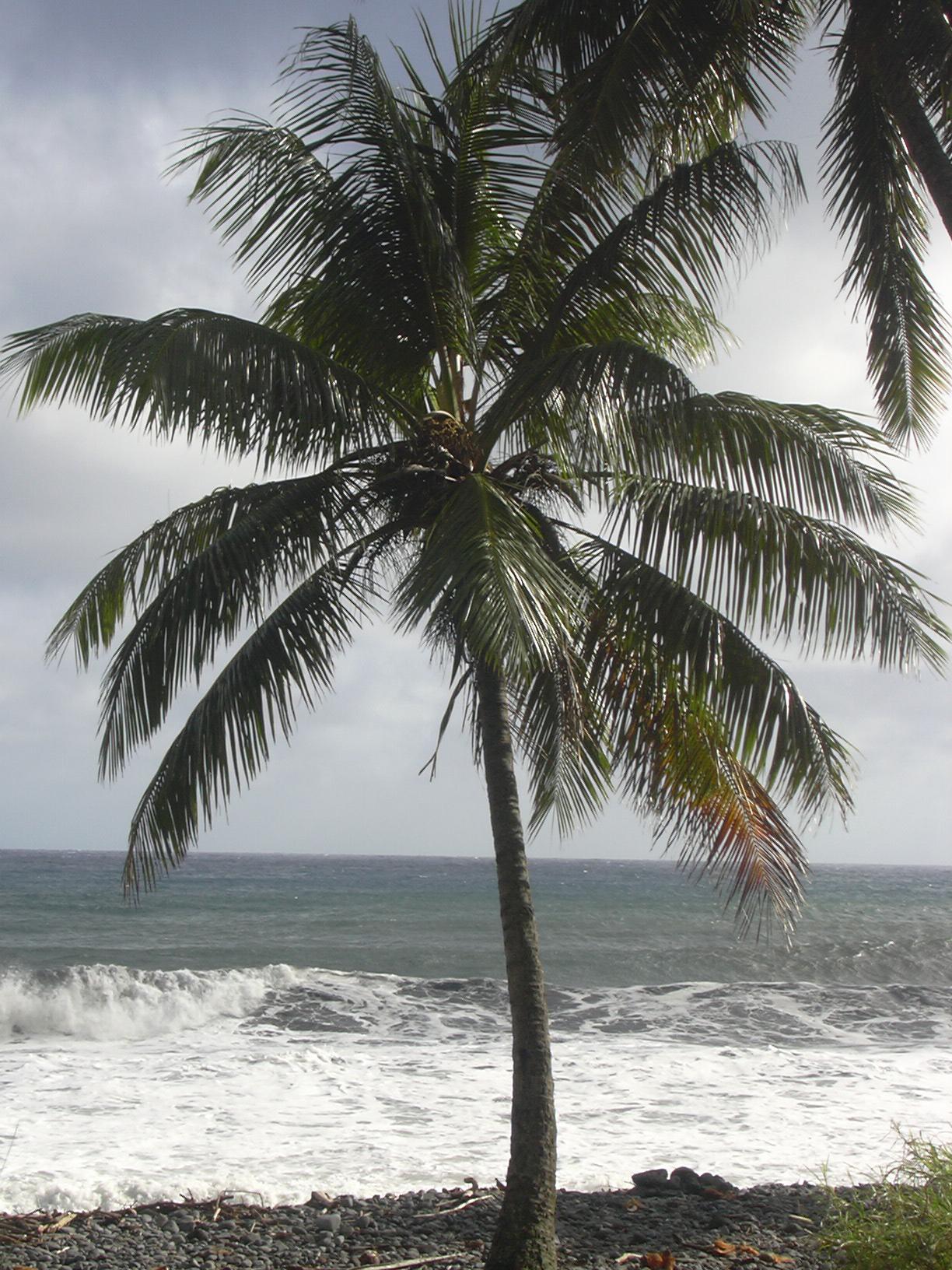 Lonely Planet Maui Pdf