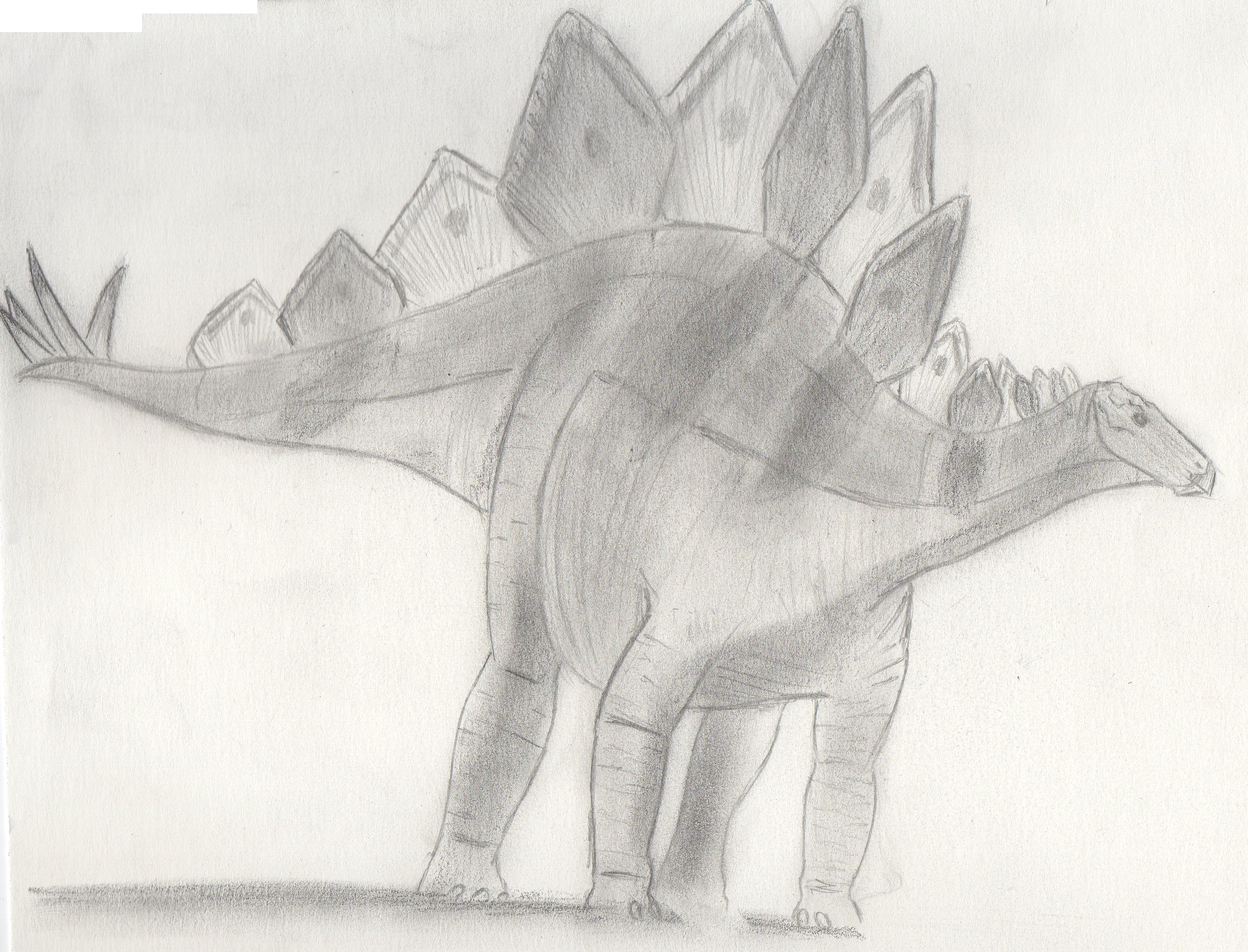 http://upload.wikimedia.org/wikipedia/commons/1/1c/Stegosaurus.jpg