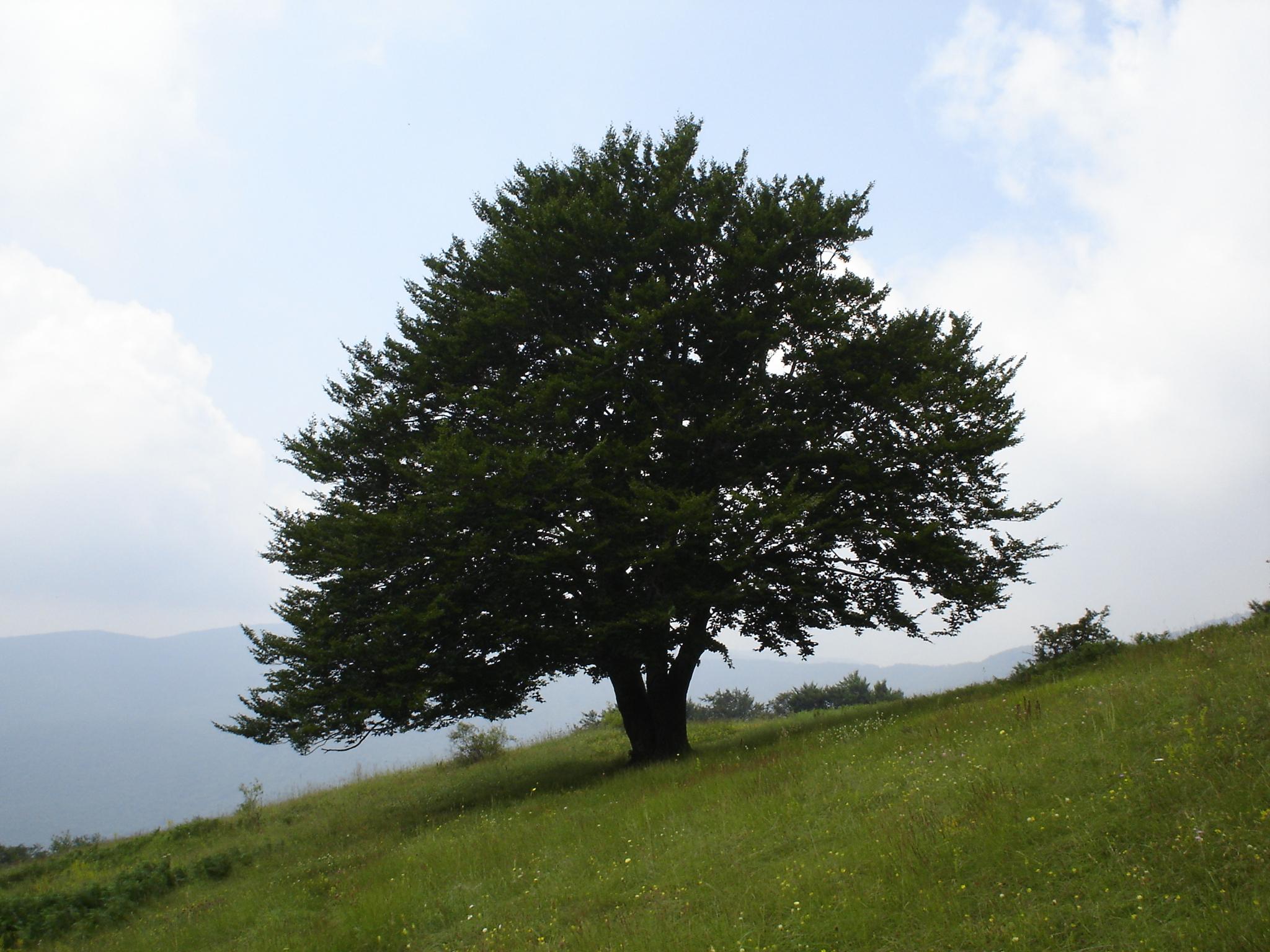 buchenwald_1
