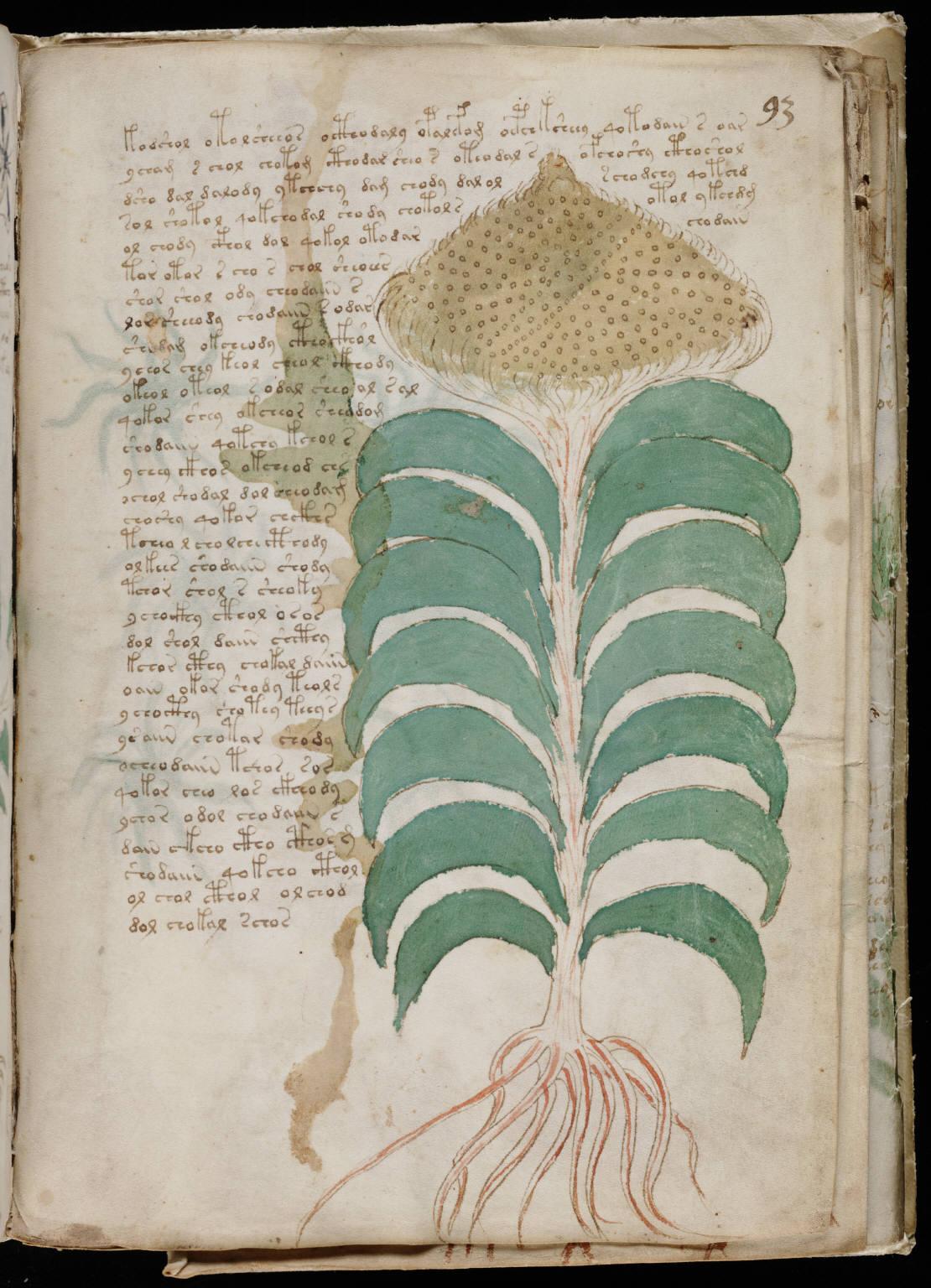 Voynich Manuscript %28167%29 ヴォイニッチ手稿(写本) どの言語にも属さない謎の文字!