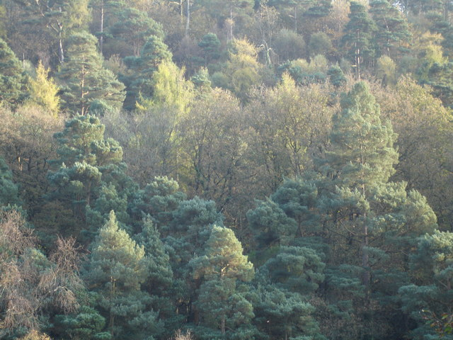 Yarner Wood in the Autumn - geograph.org.uk - 274589