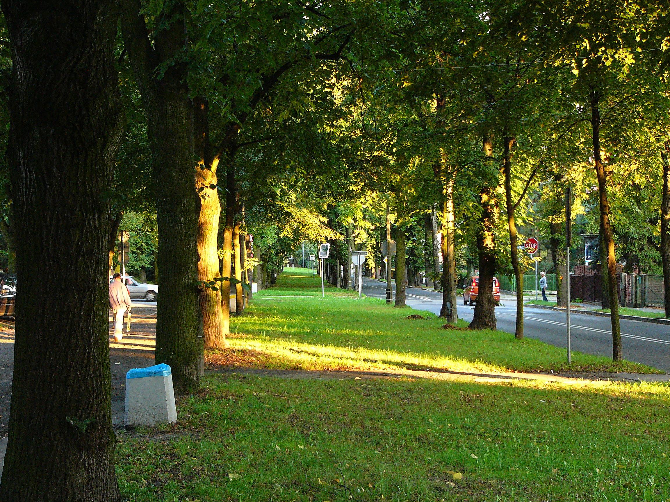 Ulica Adama Mickiewicza w Gliwicach – Wikipedia, wolna encyklopedia