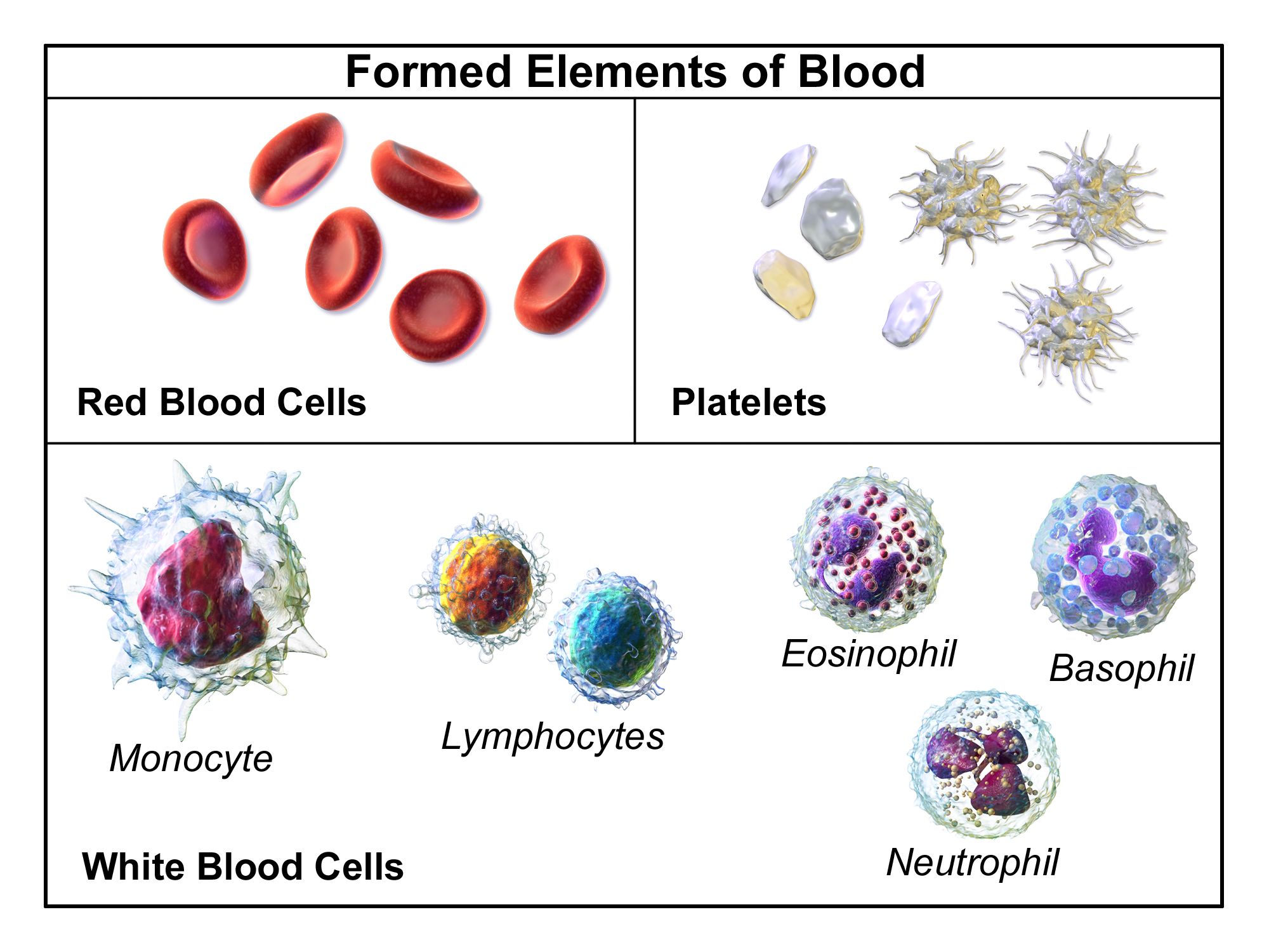 Components of Human Blood