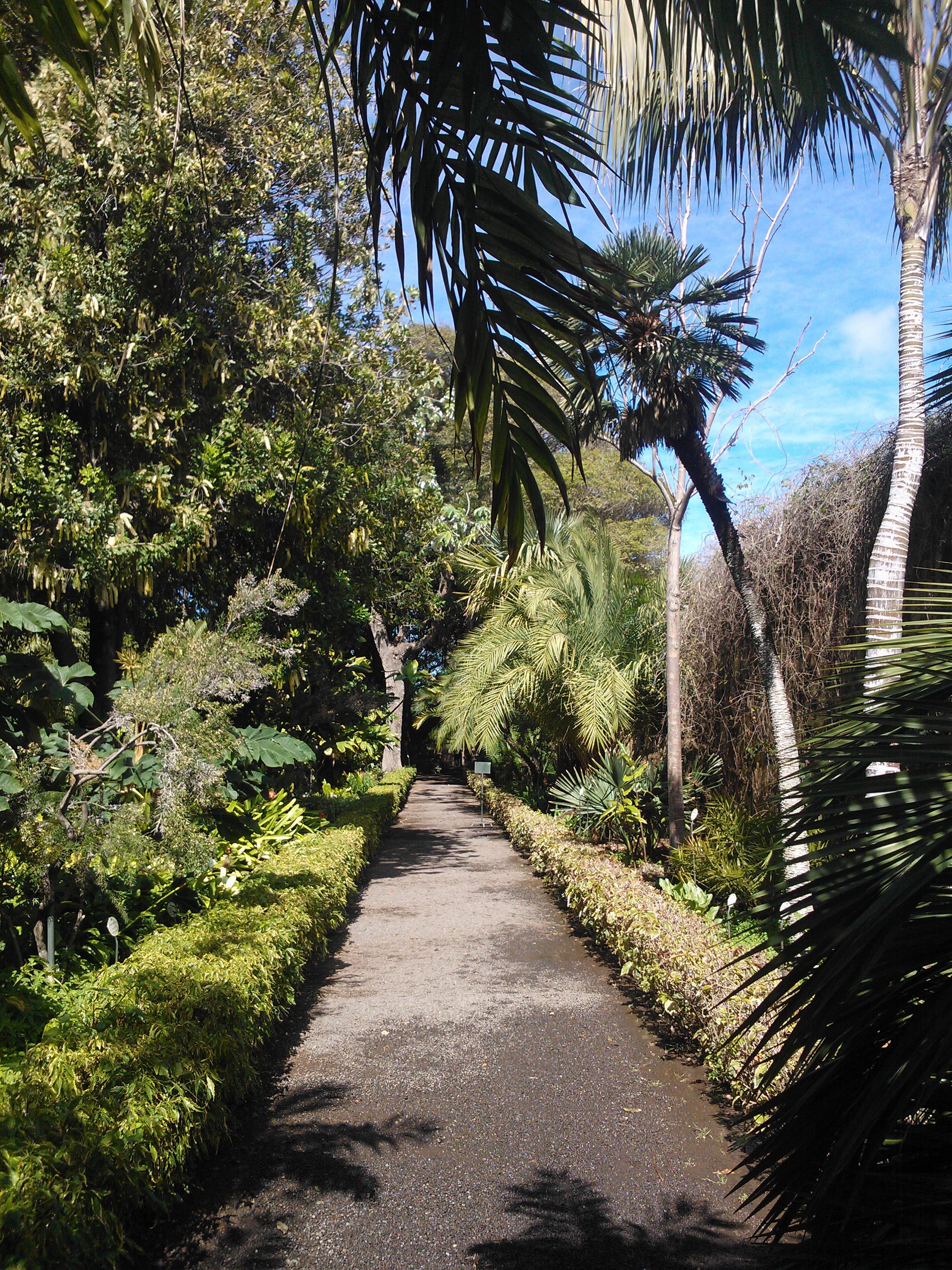 Botanical garden puerto de la cruz - Botanical garden puerto de la cruz ...