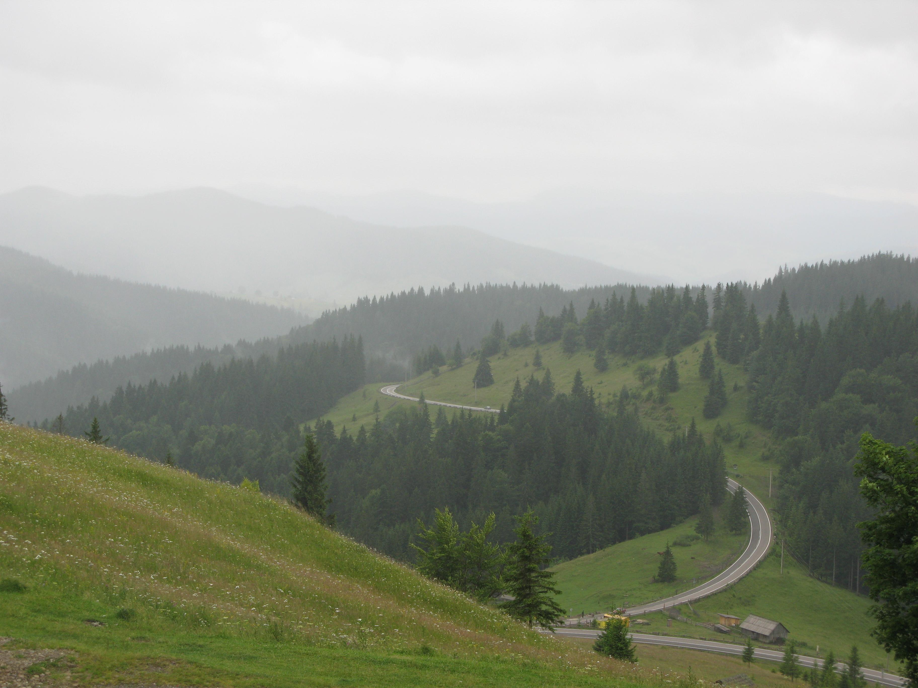 Буковина. Лісовими стежками
