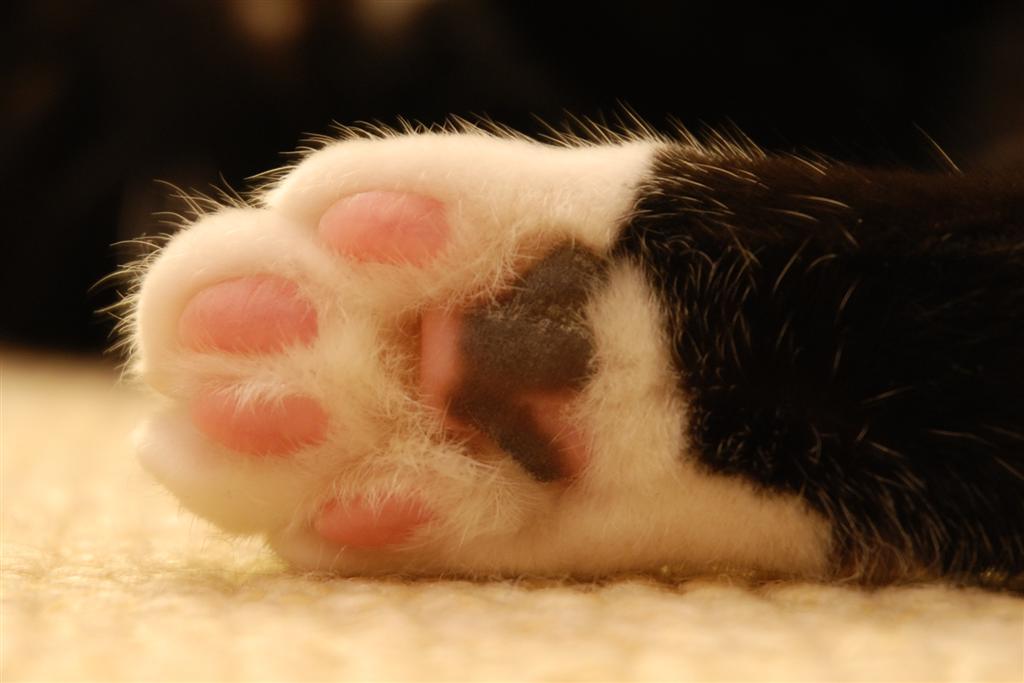 Make Dog Paw Print Impression