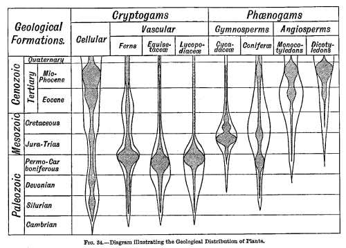 FIG. 34.—Diagram illustrating the Geological Distribution of Plants.