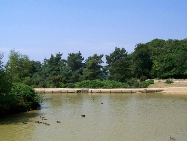 Ducks, Cadman's Pool - geograph.org.uk - 1387394