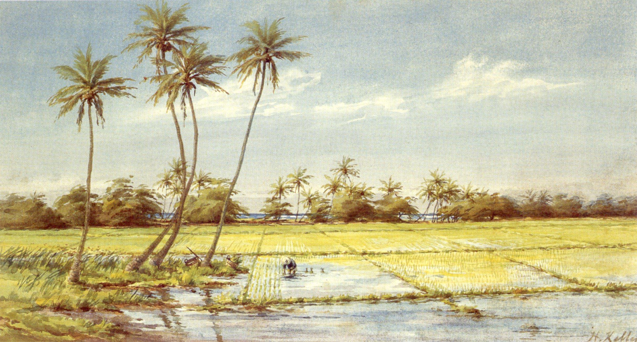 History of watercolor art - File Helen Whitney Kelley Rice Paddies Watercolor 1890 Honolulu
