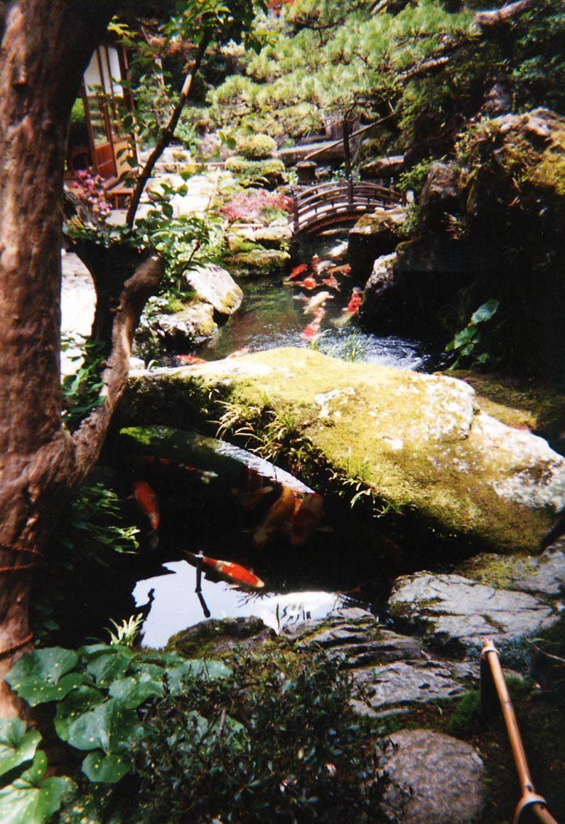FileJapanese Water Garden With Carp