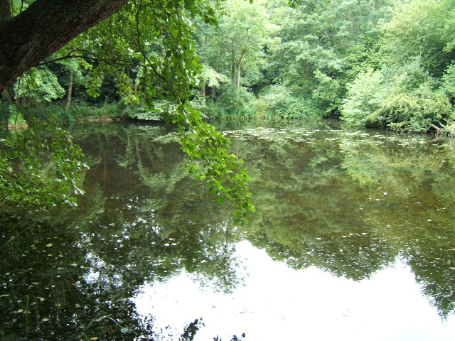 Lake, Brockhill Country Park - geograph.org.uk - 36117