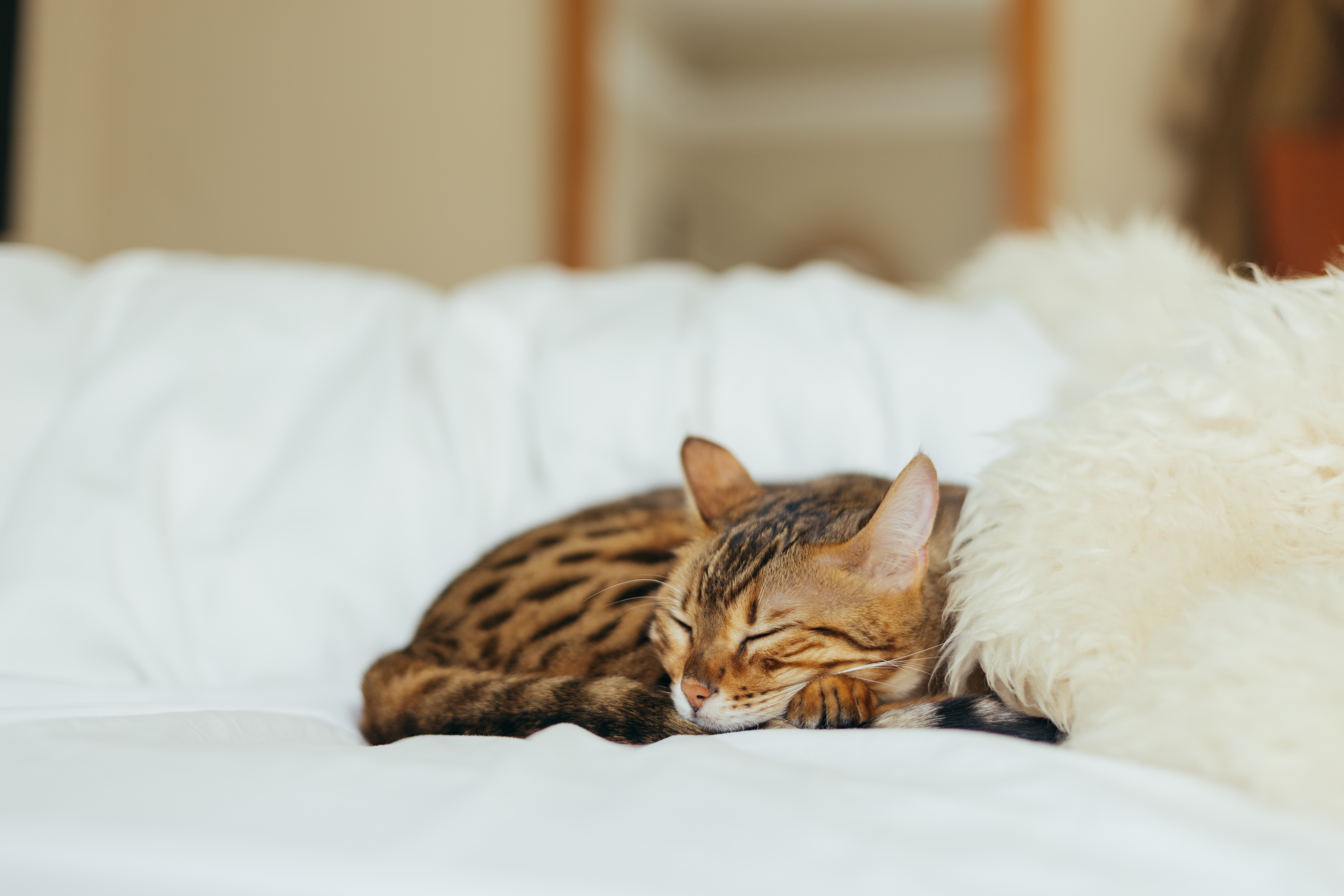 Https Staging Cat Uptake Com Token Login Ad Ed  Afe Bbecd