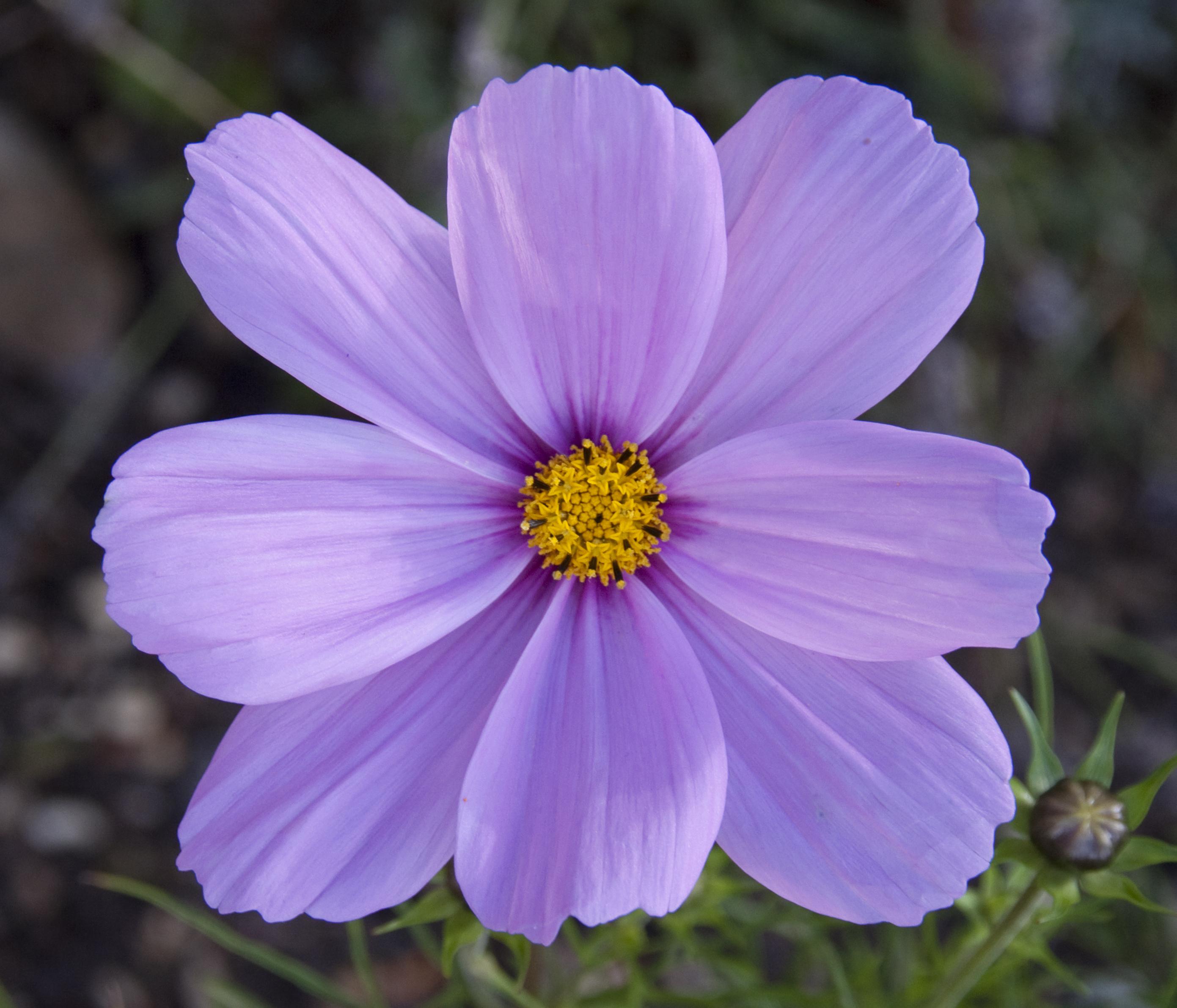 Google images flower file pink flower 4982863455 jpg for Soft furnishing wikipedia
