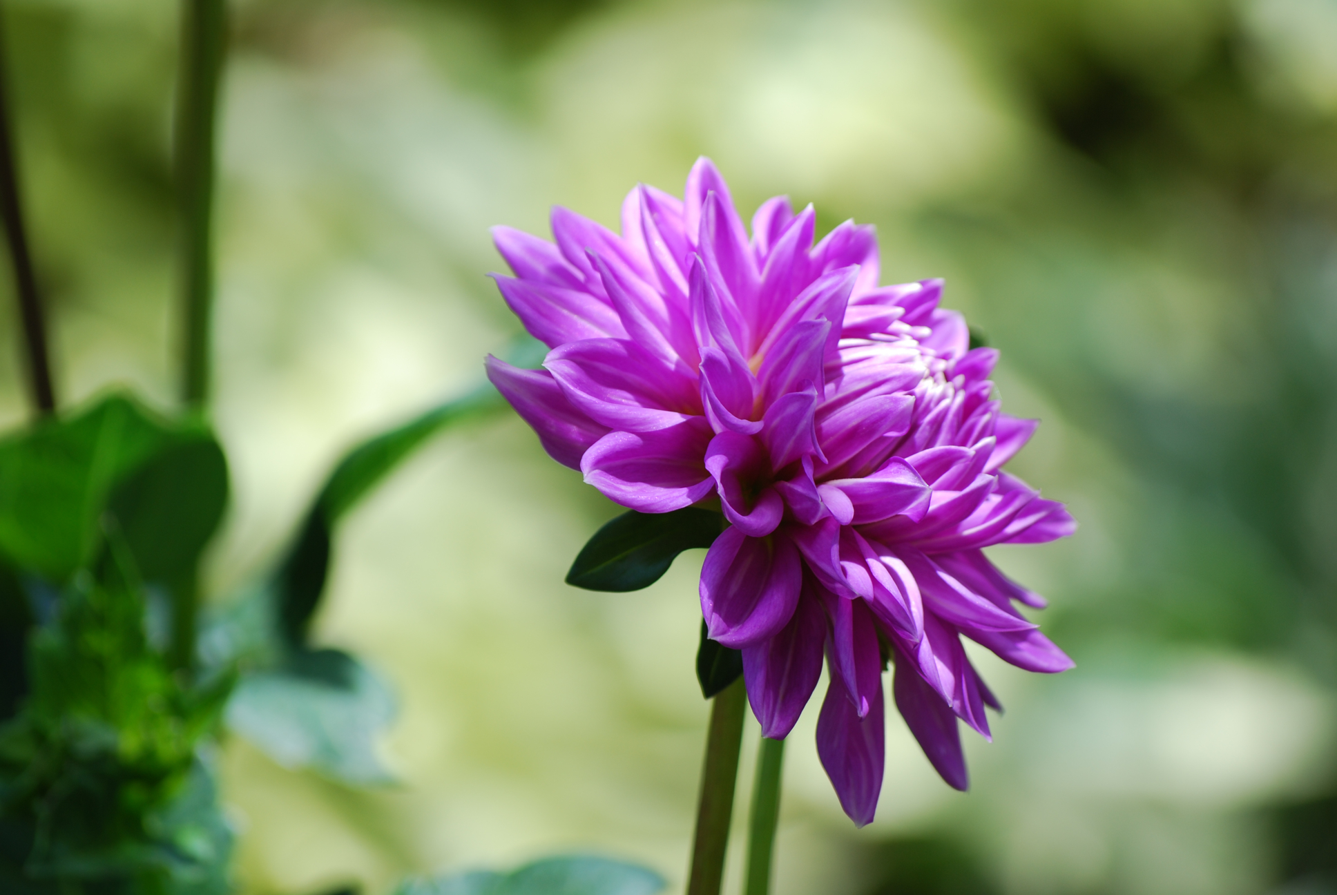 flower meaning and definition