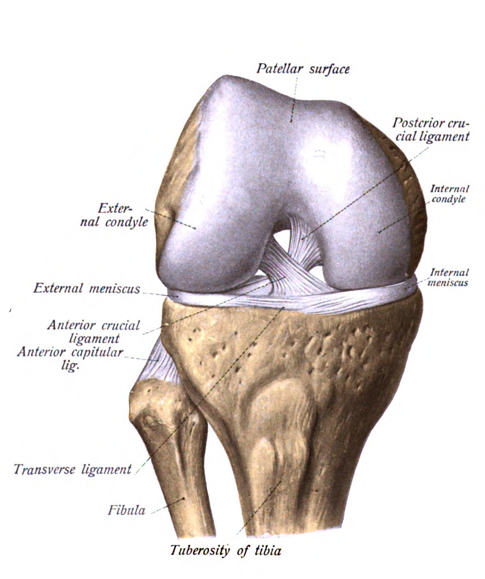 Leziuni ale ligamentului cruciat posterior al articulației genunchiului. Cauzele ruperii