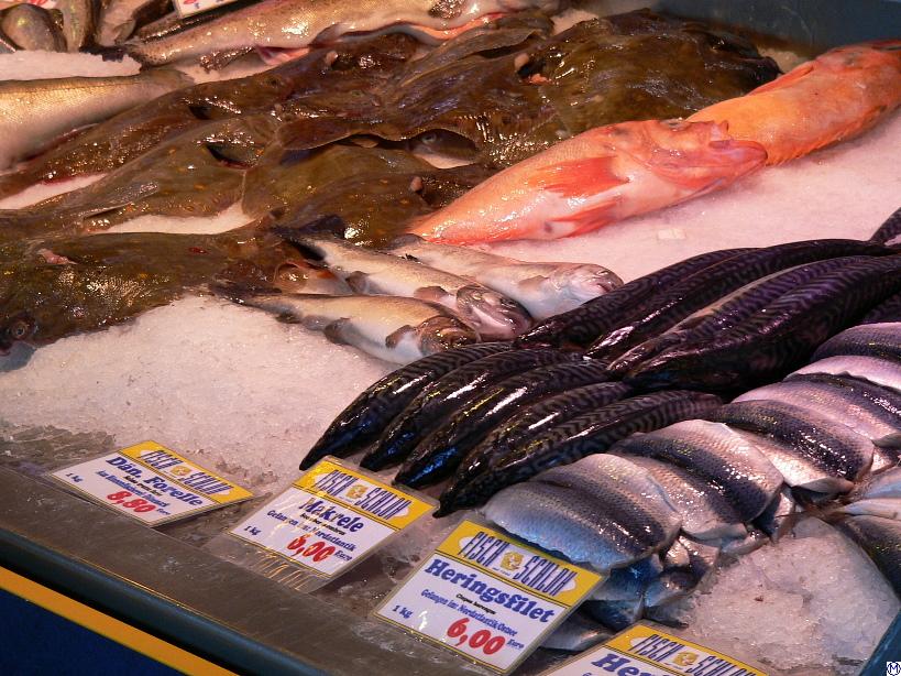 Frischer Fisch Dating-Website