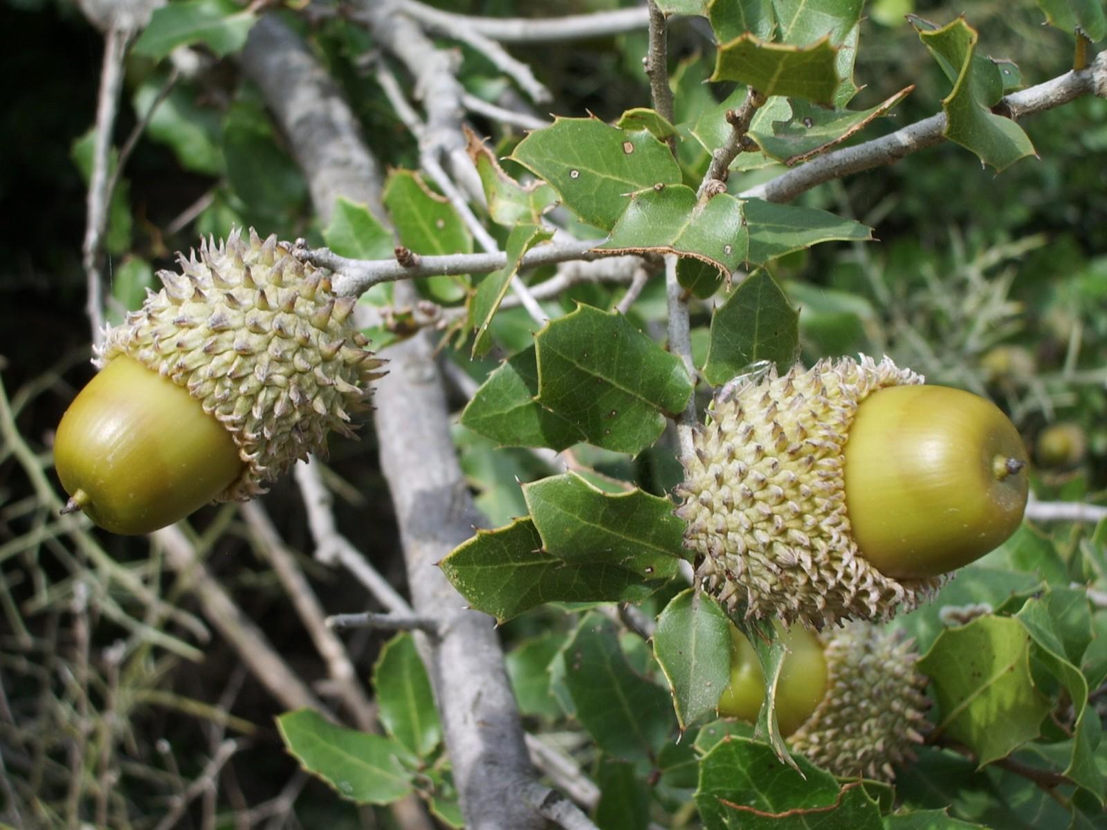 Vegetation im Mittelmeerraum - Macchie und Garrigue