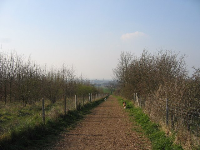 The Dogwalk at Gog Magog Downs - geograph.org.uk - 379827
