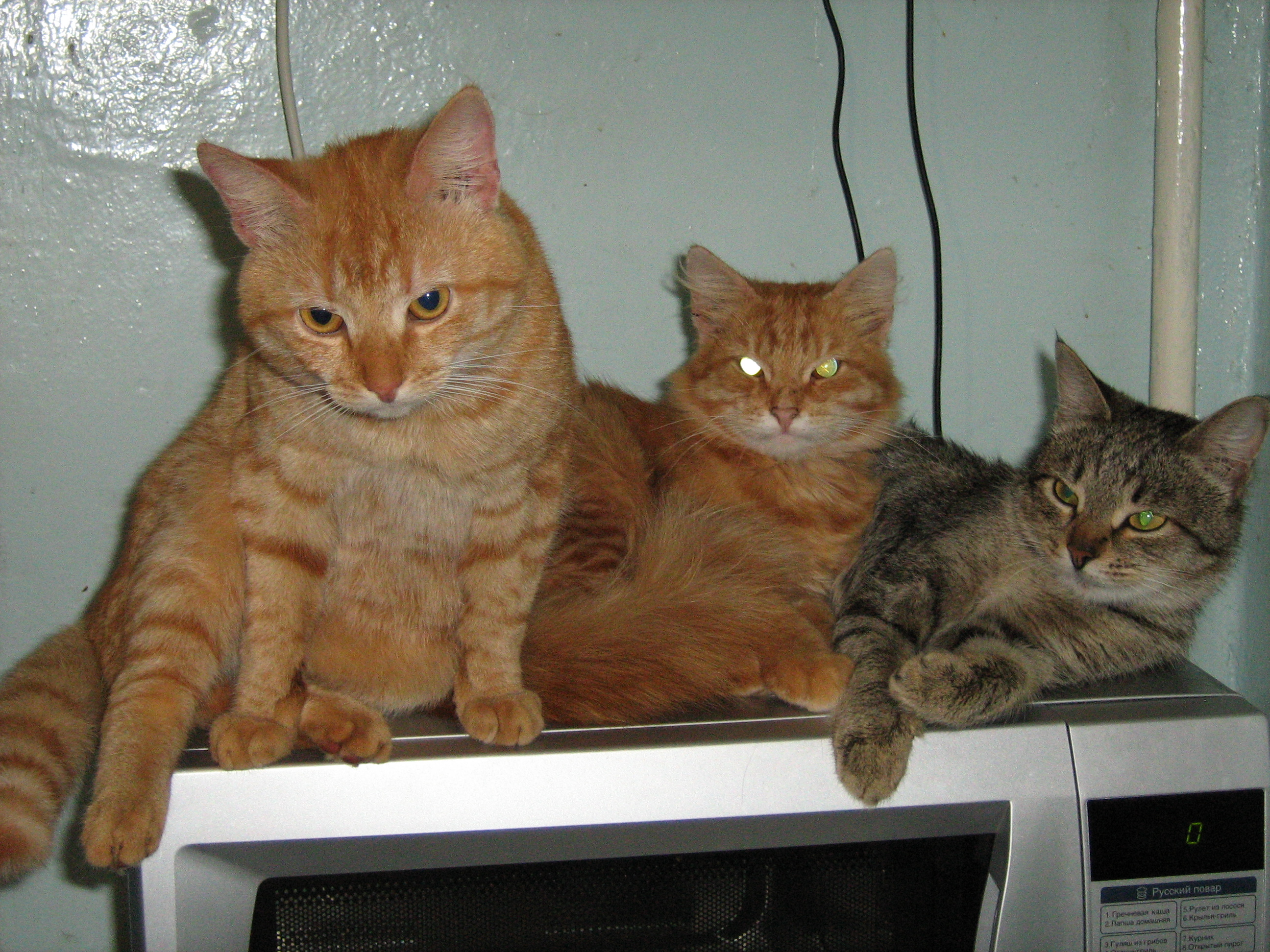 File three cats jpg wikimedia commons The three cats