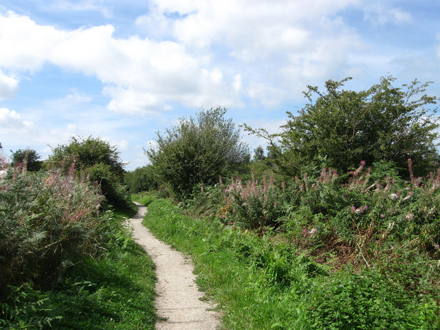 Trail, Ditchling Common - geograph.org.uk - 1446464