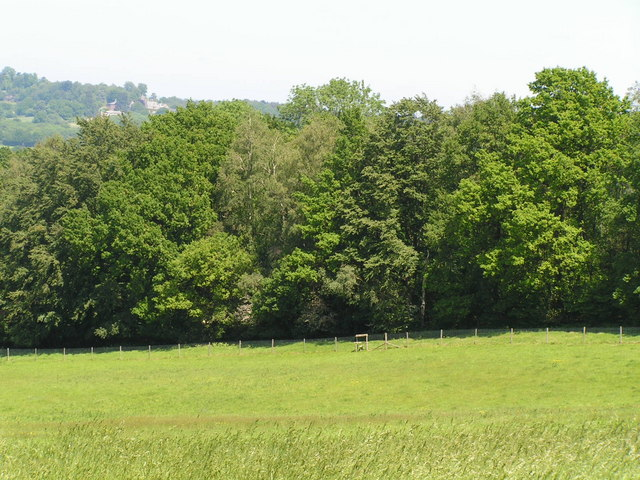 Woodland along the shores of Weir Wood Reservoir - geograph.org.uk - 182661