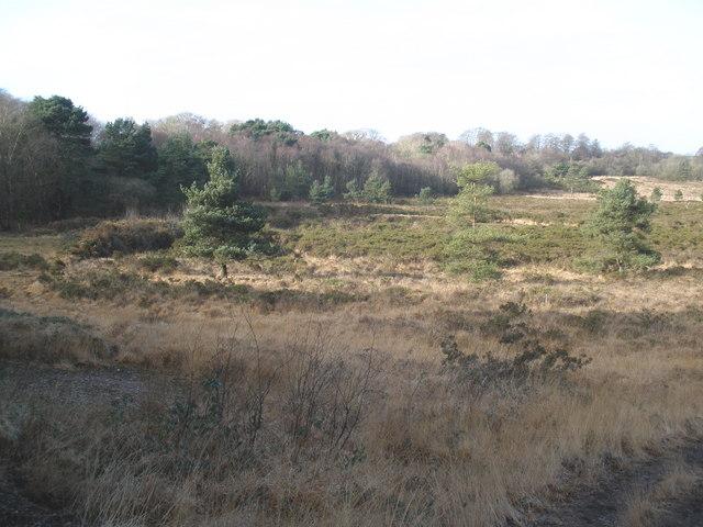 Woodland fringe, Aylesbeare Common - geograph.org.uk - 1130132