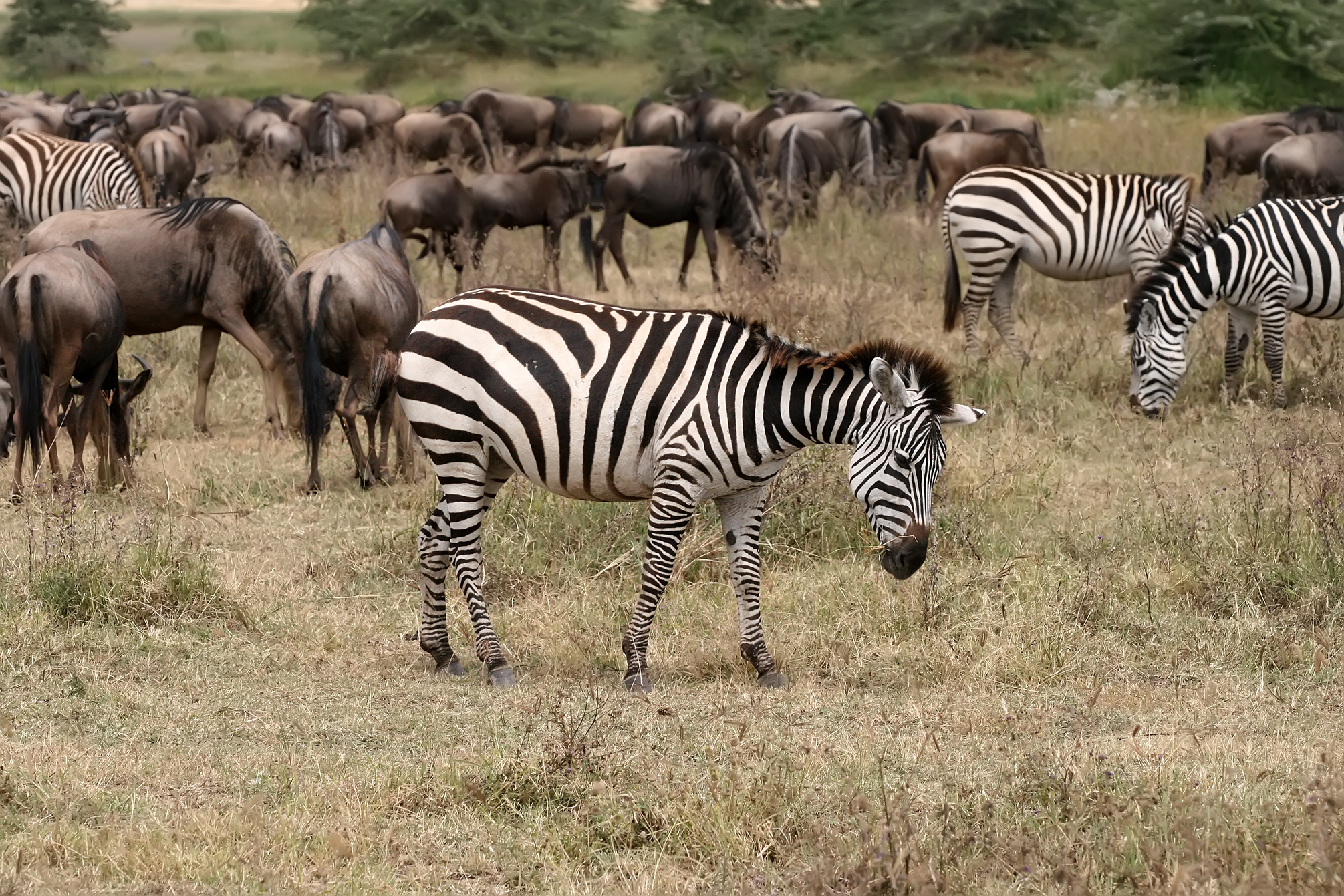 Wildebeests, The - Pointless / One And One